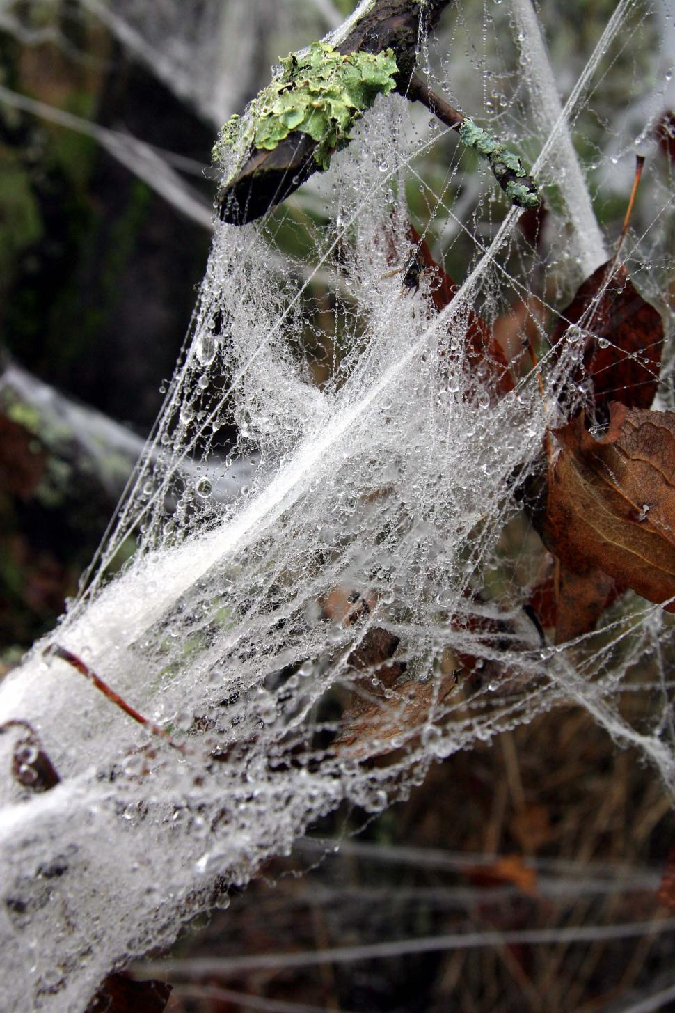 Download Free Stock Photo of halloween decoration web spider wet drips drops rain
