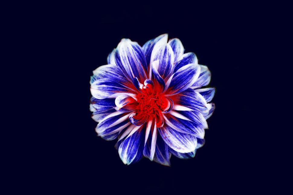 Download Free Stock Photo of Nature, flower,  pollen,  flowers,  spring,  violet,  floral,  plant,  purple,  garden,  flora,  blossom,  petal,  summer