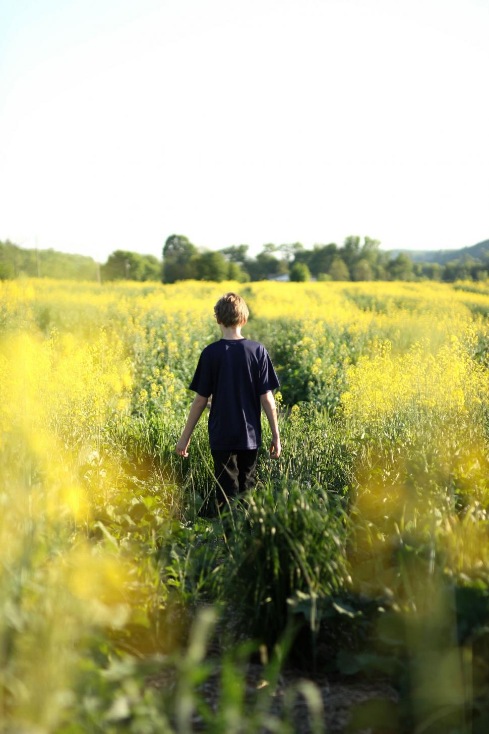 Download Free Stock Photo of Nature People rapeseed oilseed seed field land landscape rural fruit meadow sky grass summer farm agriculture yellow spring countryside season country plant outdoor tree horizon clouds