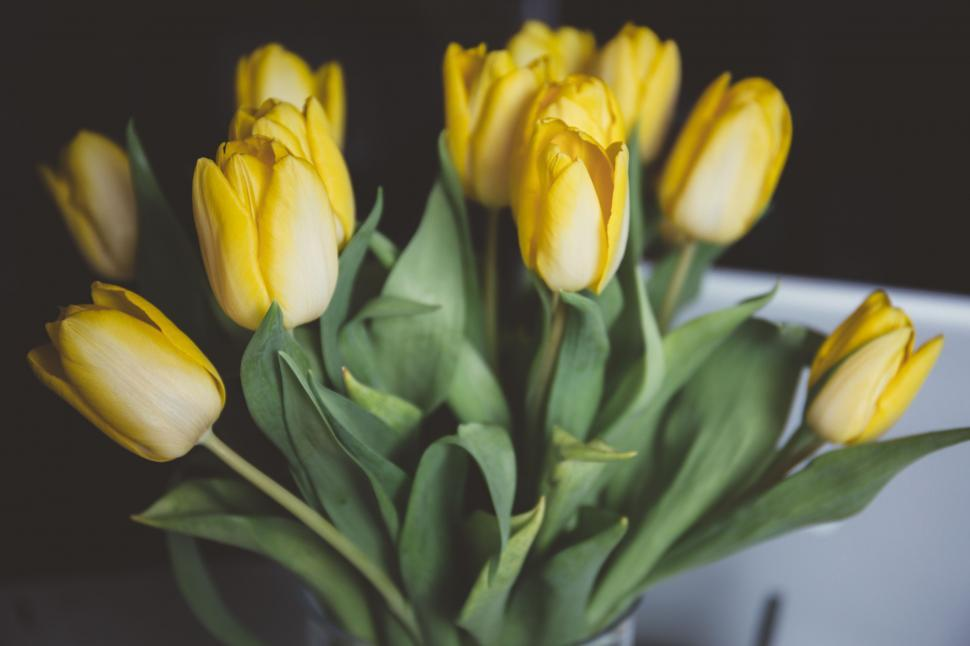 Download Free Stock Photo of Nature tulip flower spring plant blossom tulips garden floral flowers bloom petal leaf banana yellow flora bouquet season color blooming summer field stem bud colorful day bright vibrant gift seasonal fresh pink plants freshness