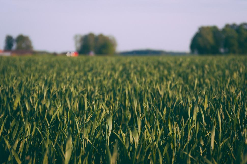 Download Free Stock Photo of Nature field wheat grain cereal agriculture farm rural landscape grass land sky summer plant countryside corn harvest country farming crop season meadow cloud growth straw horizon grow spring farmland sunny sun rye seed environment rice clouds autumn food natural bread yellow