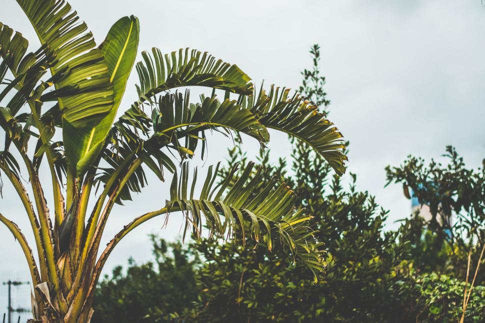 Download Free Stock Photo of