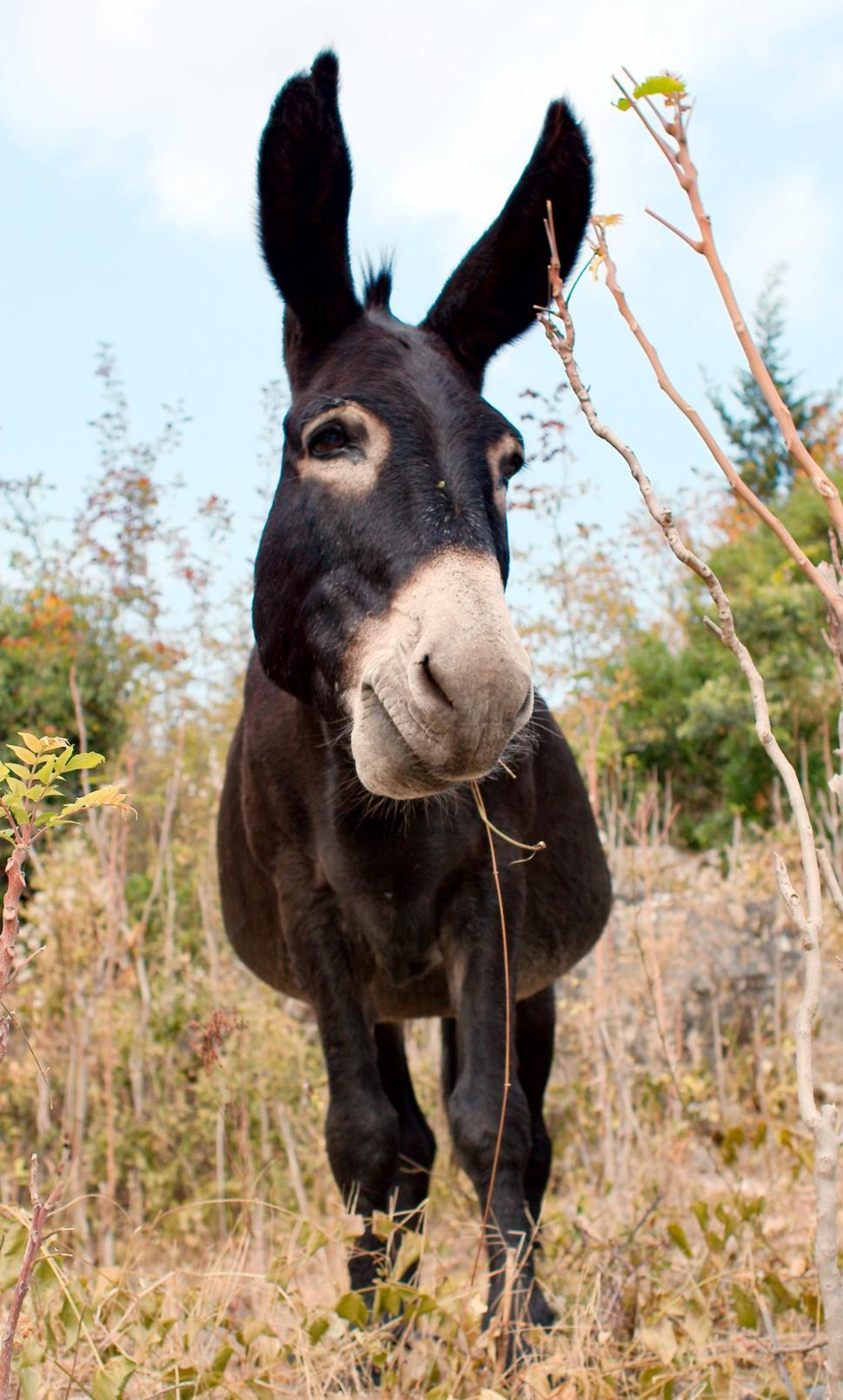 Download Free Stock Photo of The donkey