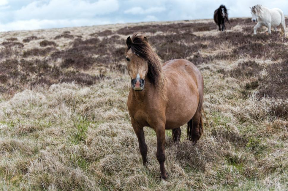 Download Free Stock HD Photo of Welsh horses Online