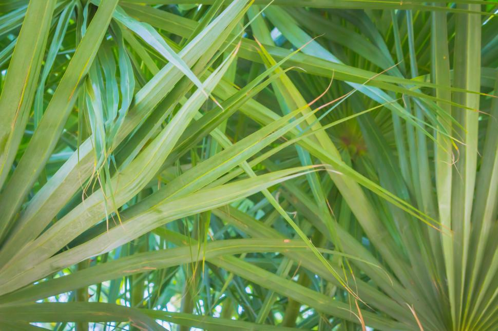 Download Free Stock Photo of Palm Leaves