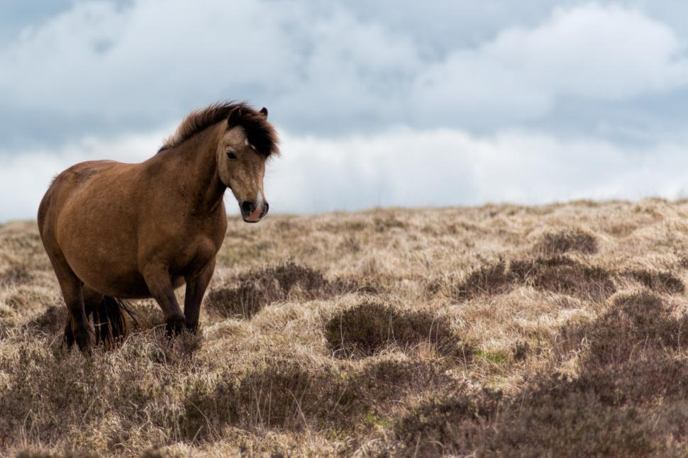 Download Free Stock HD Photo of Brown horse Online