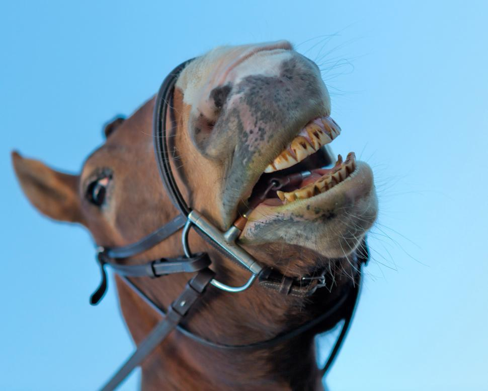 Download Free Stock Photo of Funny horse