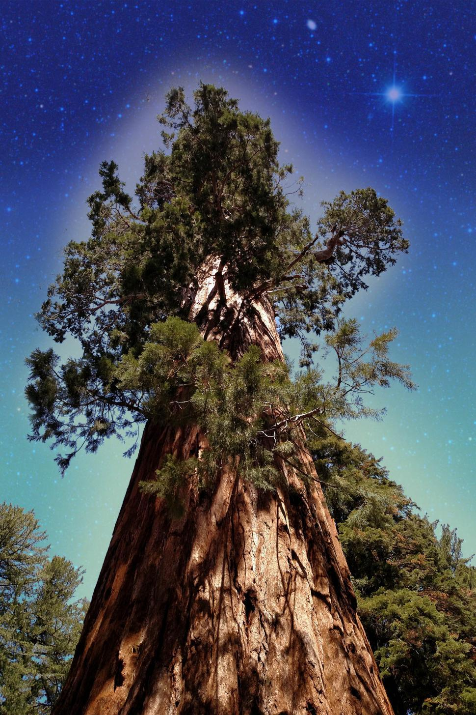 Download Free Stock HD Photo of King Sequoia Online