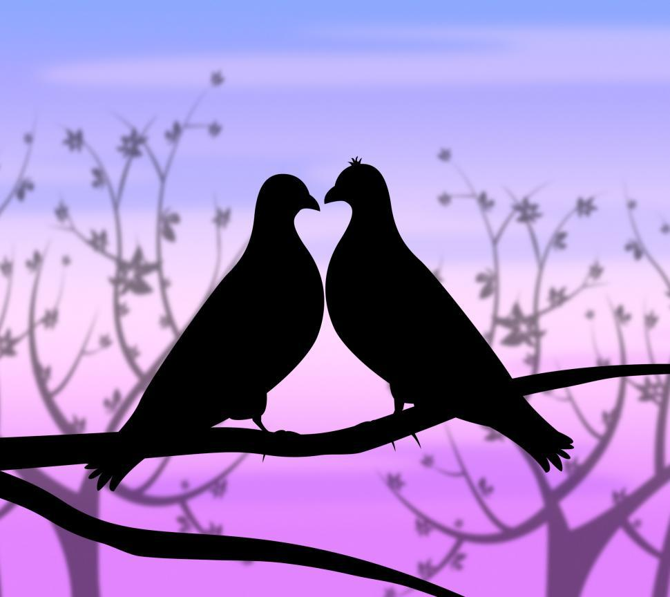 Download Free Stock HD Photo of Love Birds Represents Compassion Passion And Heart Online