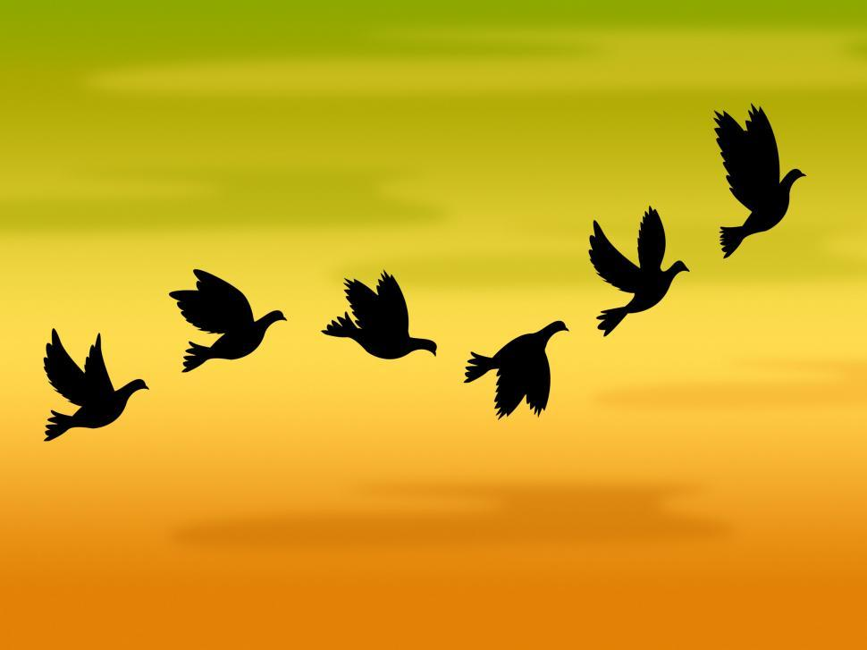 Download Free Stock HD Photo of Flying Birds Represents Summer Time And Heat Online