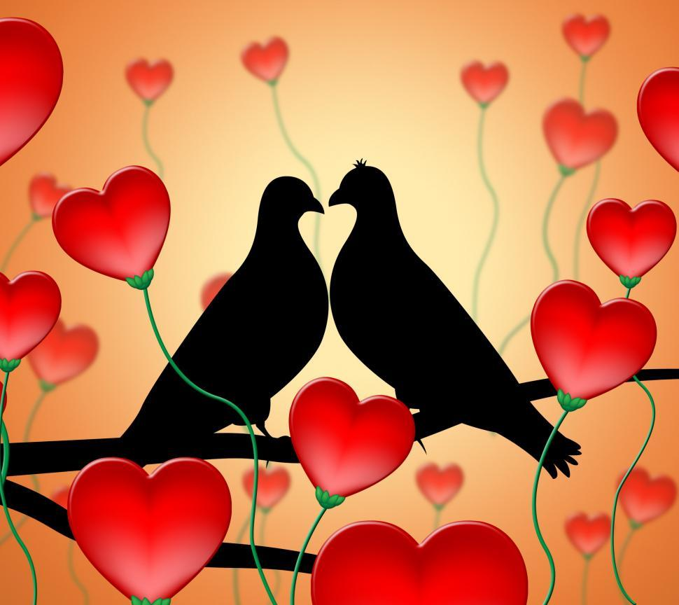 Download Free Stock HD Photo of Love Birds Means Tenderness Wildlife And Compassion Online