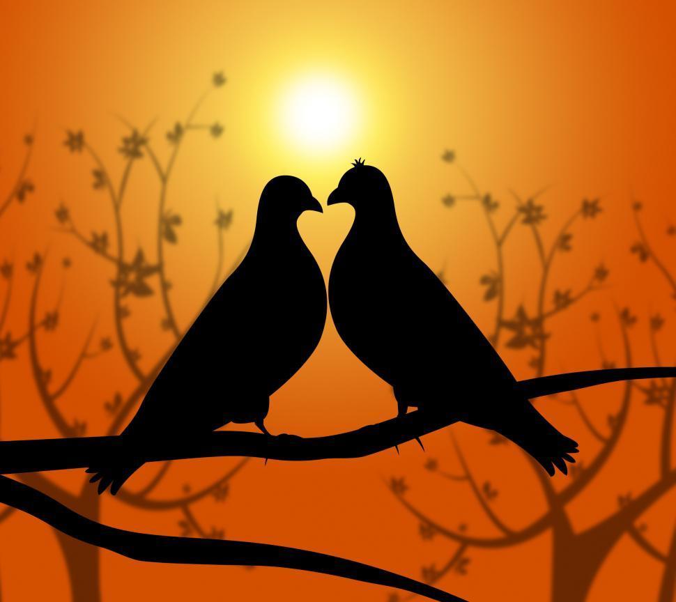 Download Free Stock Photo of Love Birds Represents Heart Compassion And Boyfriend