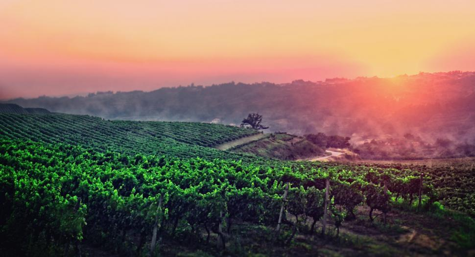 Download Free Stock Photo of A New Dawn is Breaking - A Vineyard in Central Portugal - Penalv