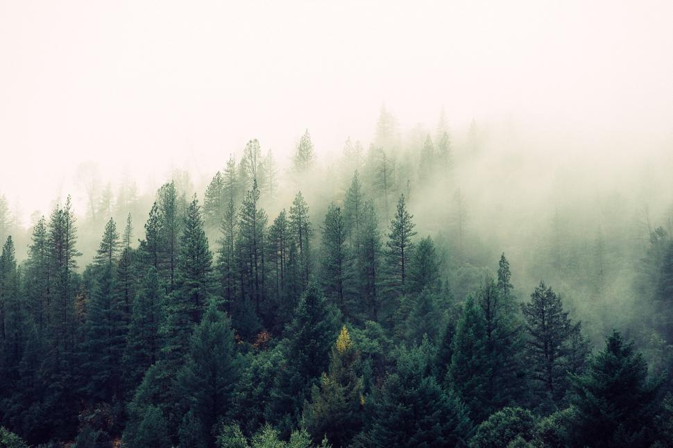 Download Free Stock Photo of Fog in the Forest