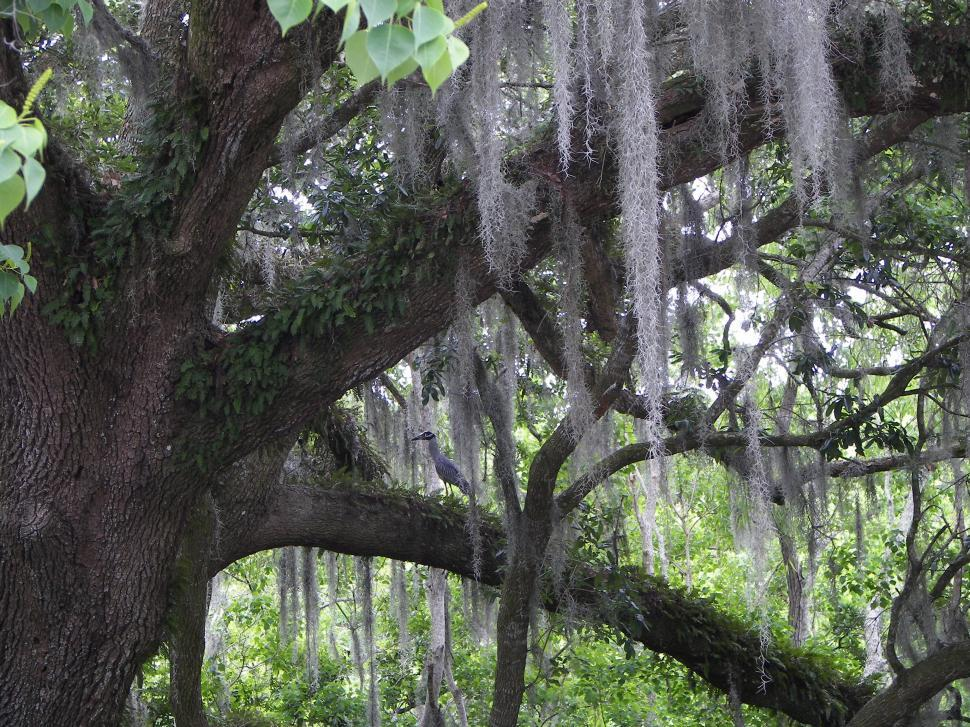 Download Free Stock HD Photo of Louisiana Swamps Online