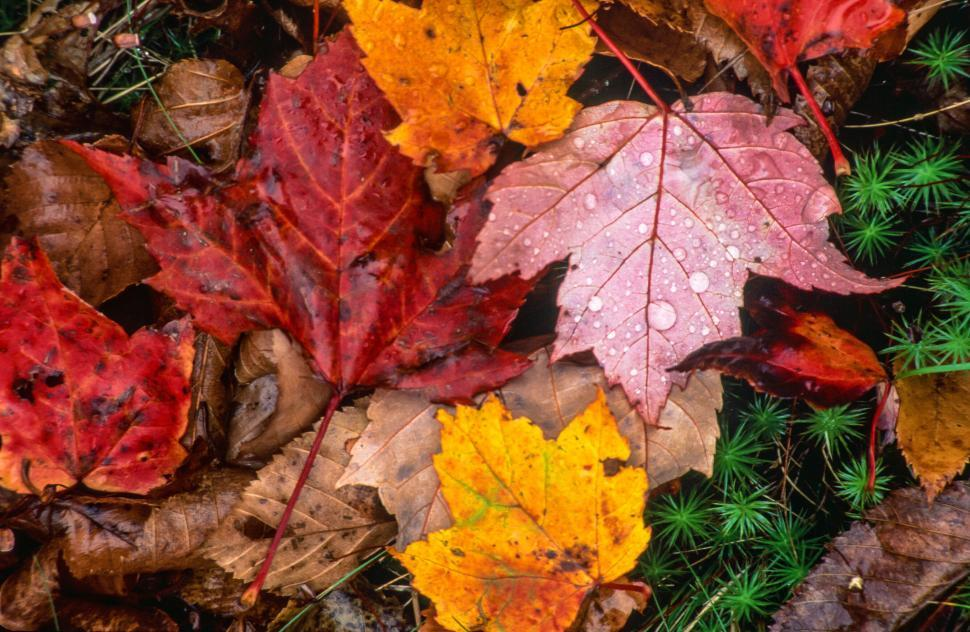 Download Free Stock Photo of Colorful Wet Fall foliage