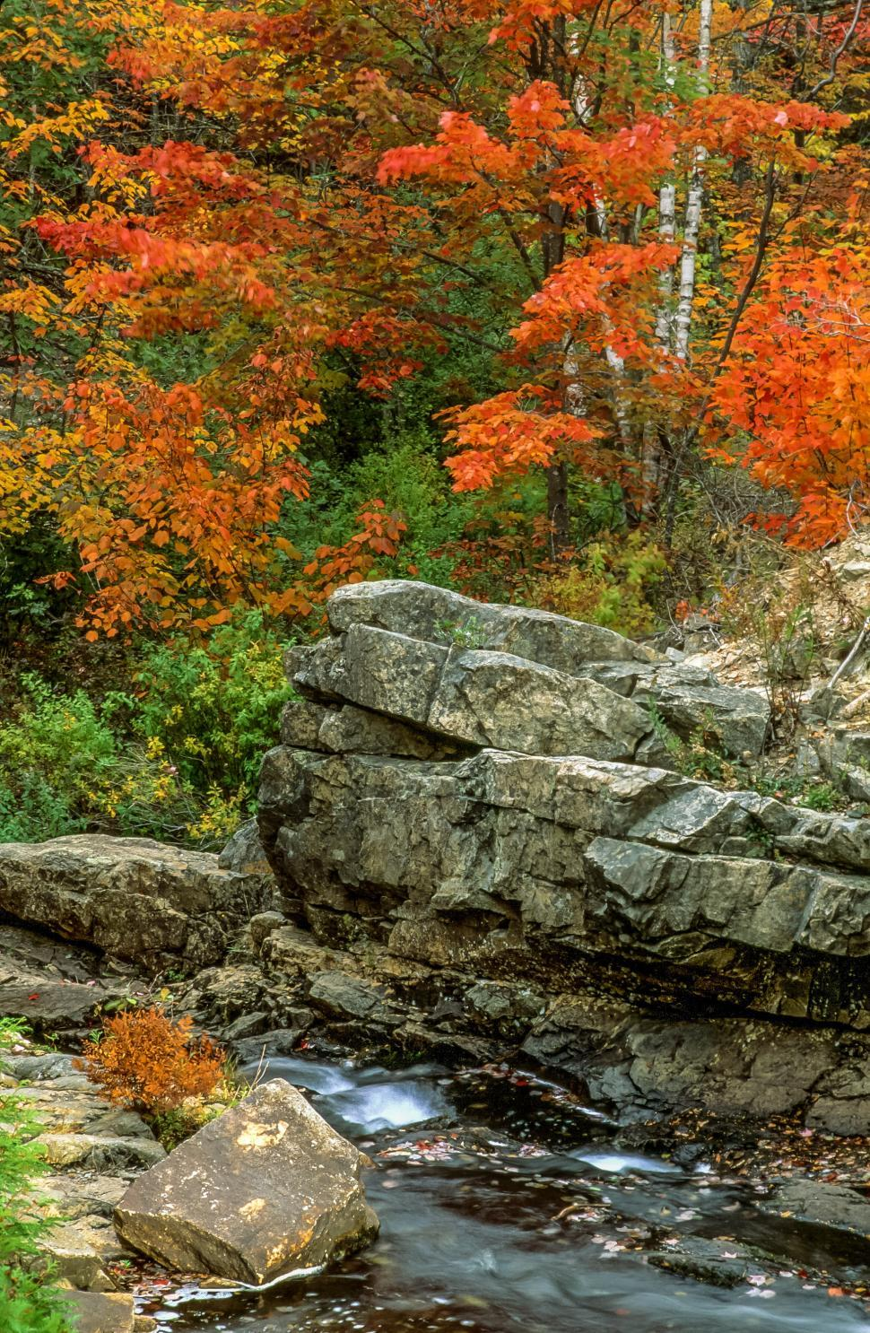 Download Free Stock Photo of Fall foliage colors and stream