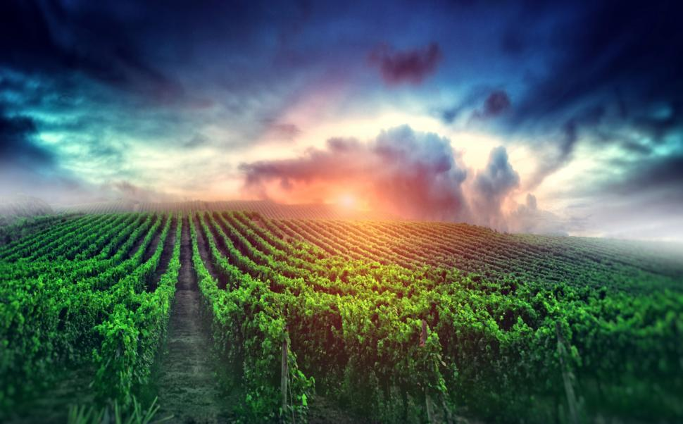 Download Free Stock HD Photo of Cloudy Sunrise over the Vineyard - Wine and Winemaking Online