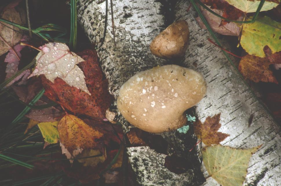 Download Free Stock HD Photo of Wet forest leaves, trees, mushrooms Online