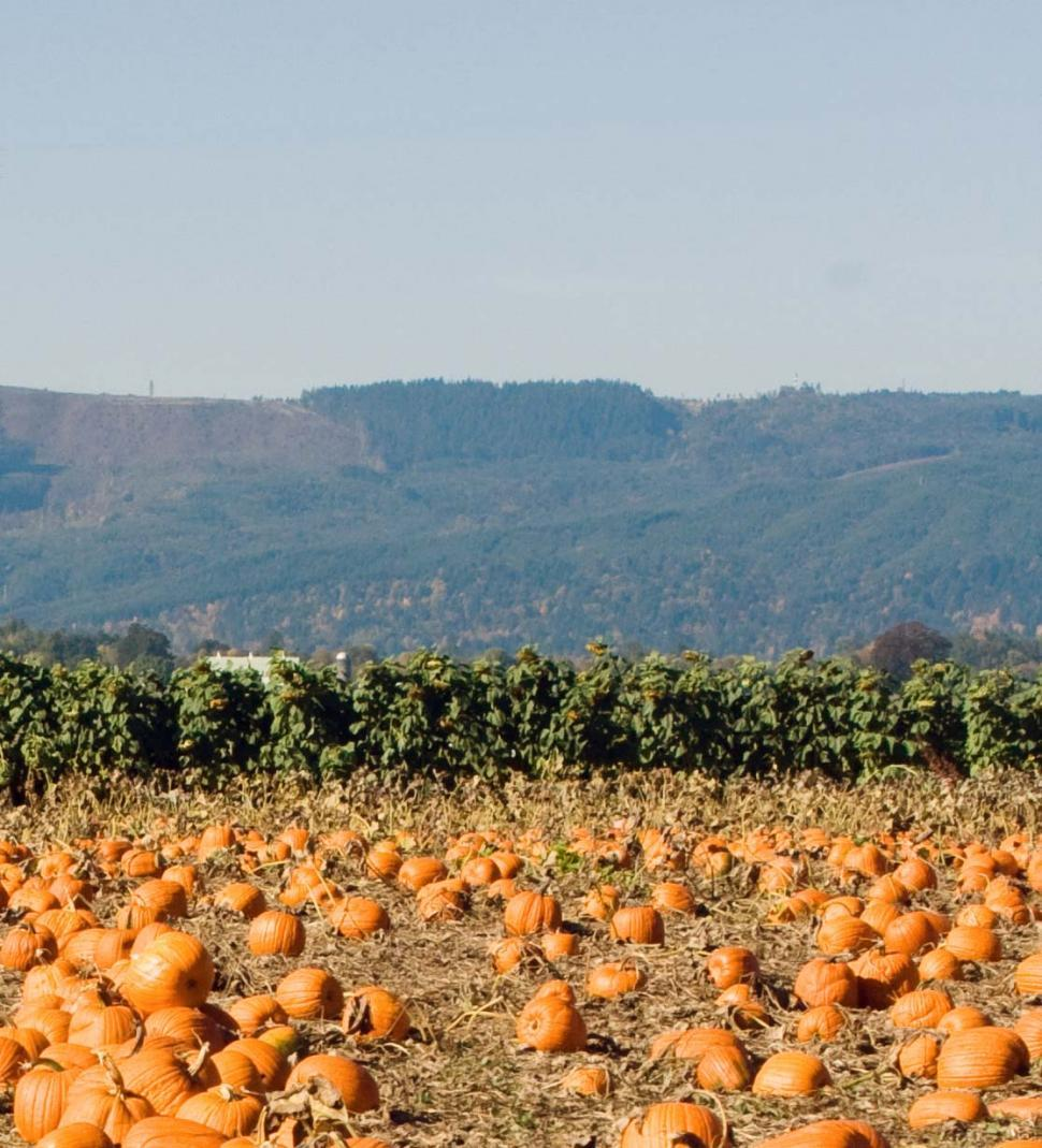 Download Free Stock HD Photo of pumpkin patch 1 Online