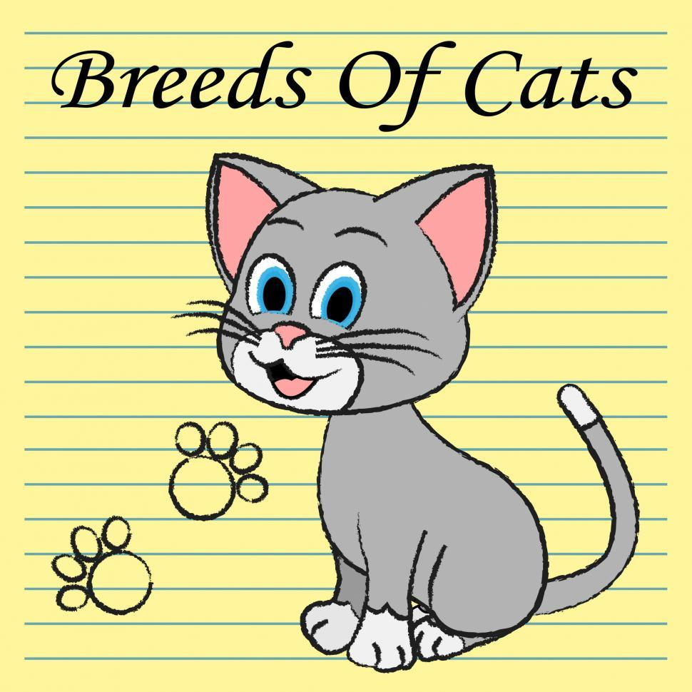 Download Free Stock HD Photo of Breeds Of Cats Indicates Pets Puss And Pedigree Online