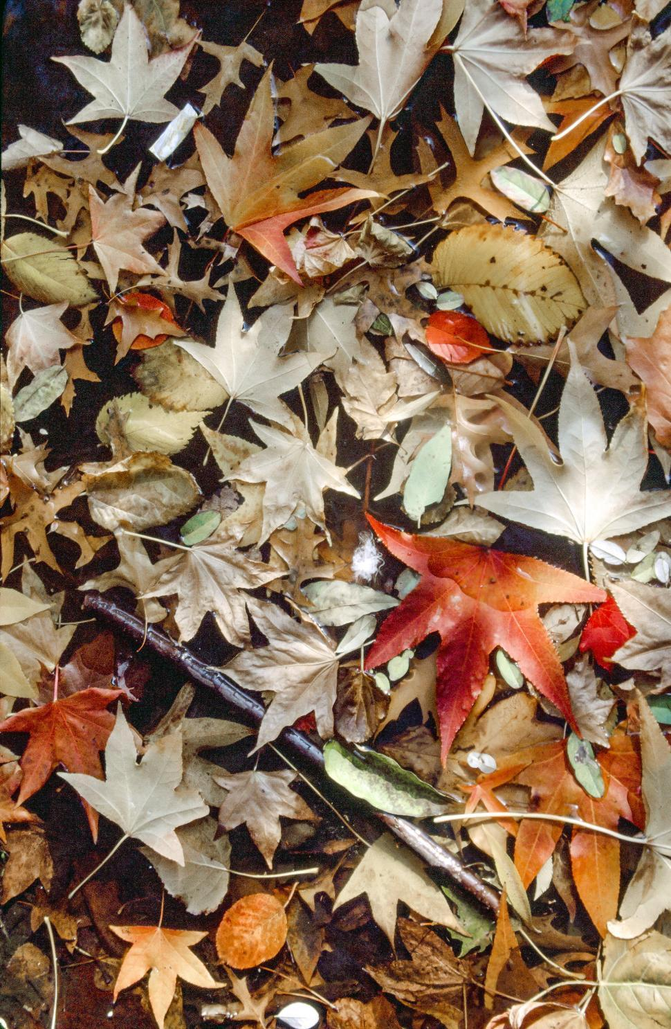 Download Free Stock Photo of Dried leaves background