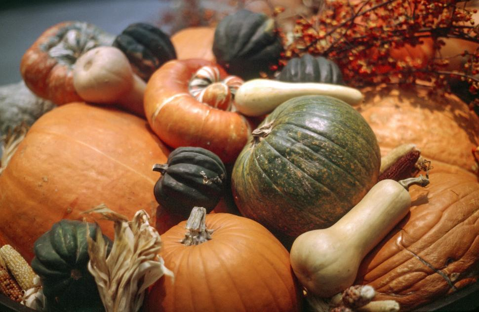 Download Free Stock Photo of Fresh Mulitcolor Pumpkins