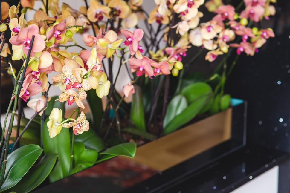 Download Free Stock Photo of Pink Yellow flowers orchid flower plant flowers