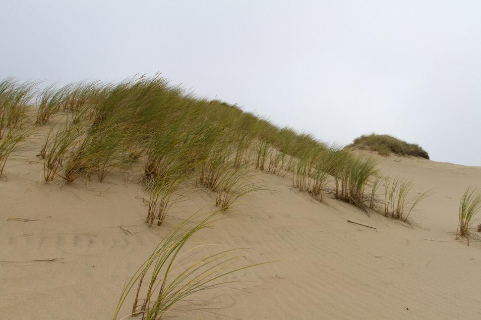 Download Free Stock HD Photo of Dune Grass Online