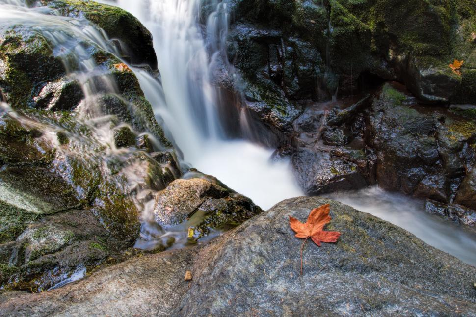 Download Free Stock HD Photo of Waterfalls with maple leaf Online
