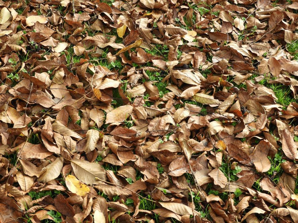 Download Free Stock Photo of Fallen leaves in autumn