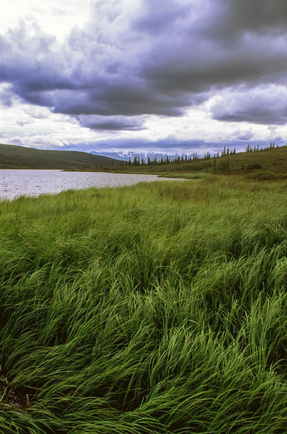 Download Free Stock Photo of Marsh grass