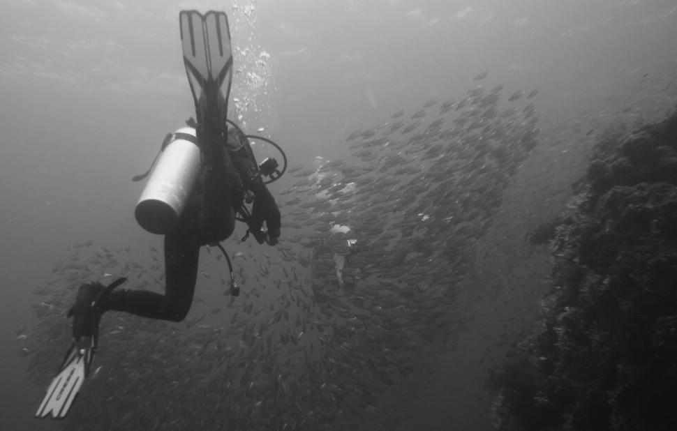 Download Free Stock Photo of Scuba diver with school of fishes