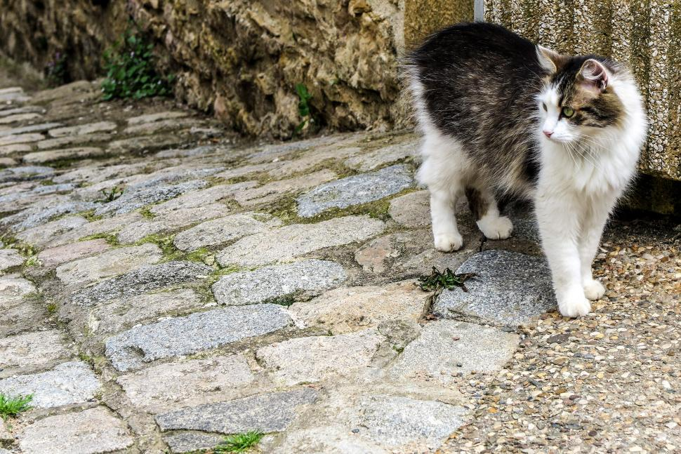 Download Free Stock HD Photo of Friendly street cat Online