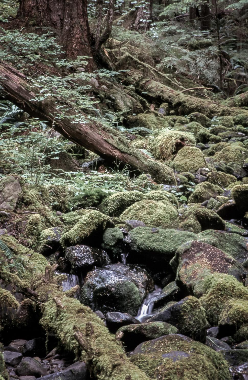 Download Free Stock HD Photo of Fern Rock Stones and waterfall Online