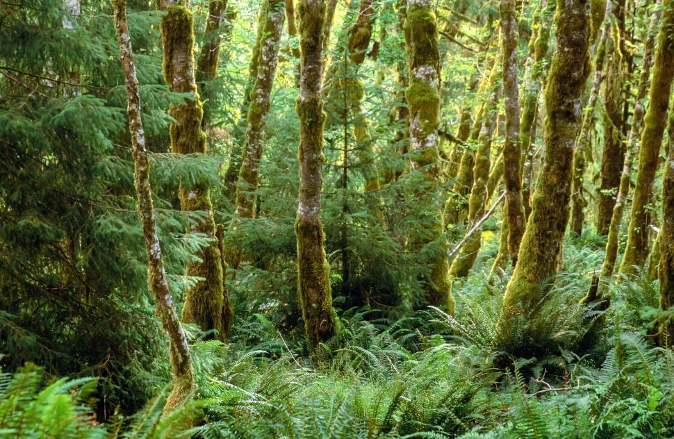 Download Free Stock HD Photo of Fern and moss Online