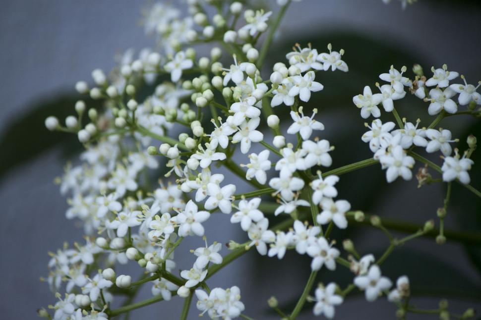 Download Free Stock HD Photo of White flowers Online