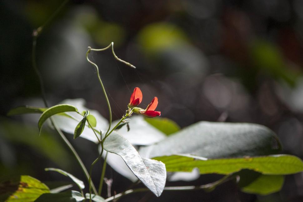 Download Free Stock Photo of Red flowered plant