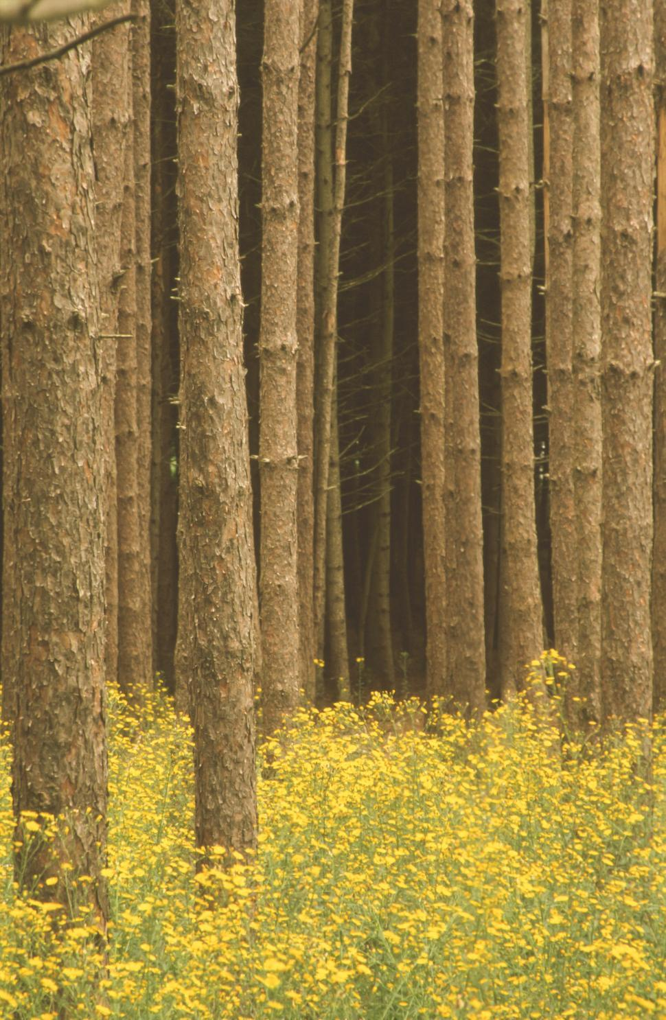 Download Free Stock Photo of Tree Trunks and Bulbous Buttercup Flowers Background