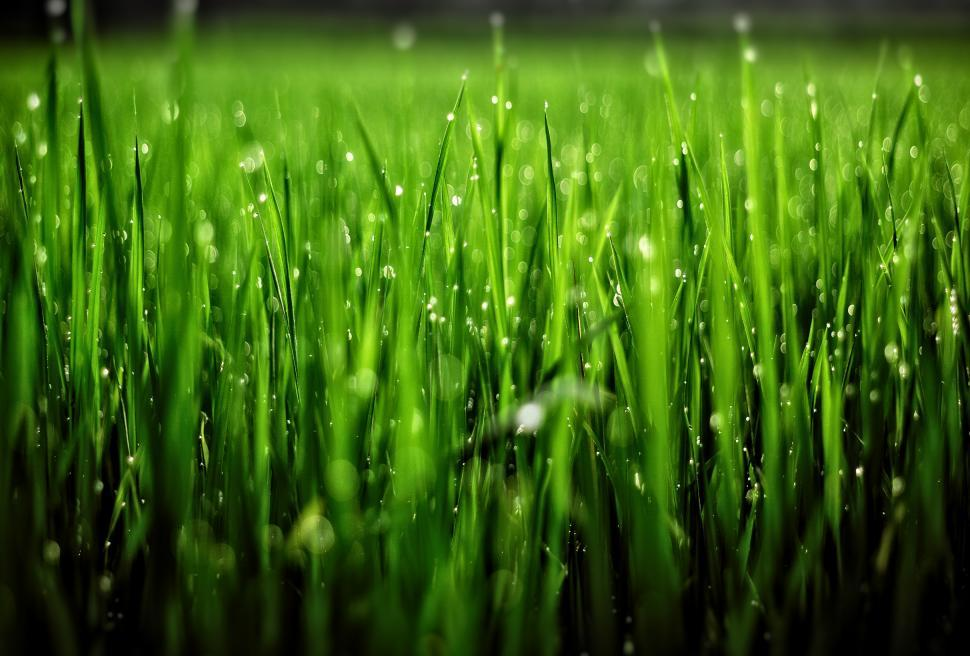 Download Free Stock Photo of Grass with Droplets - Shallow Focus
