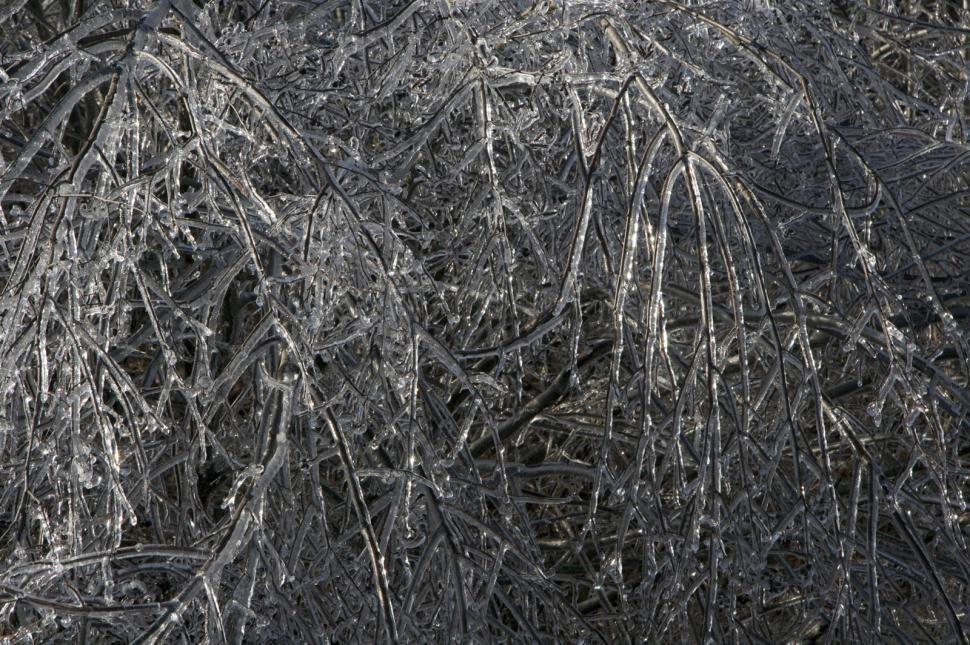 Download Free Stock Photo of Icy Trees