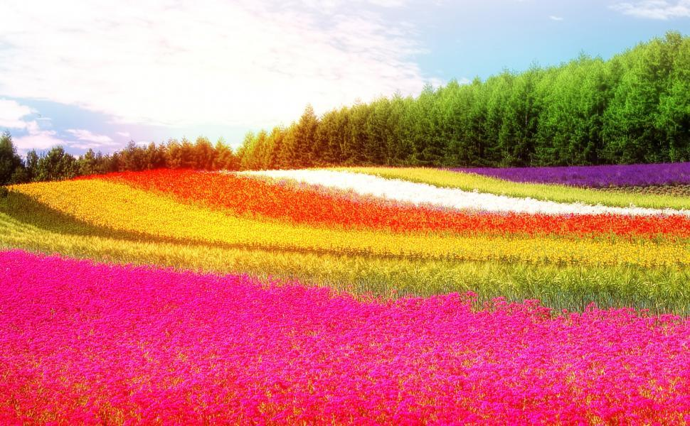 Download Free Stock HD Photo of Field - Colorful Flowers - Summer Online