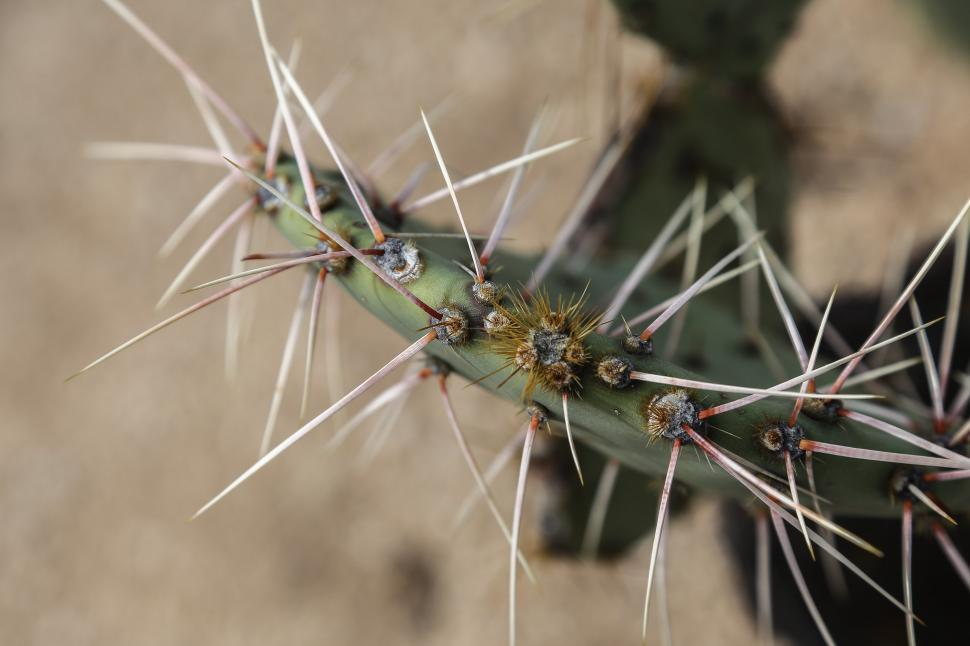 Download Free Stock HD Photo of Prickly pear cactis needles Online