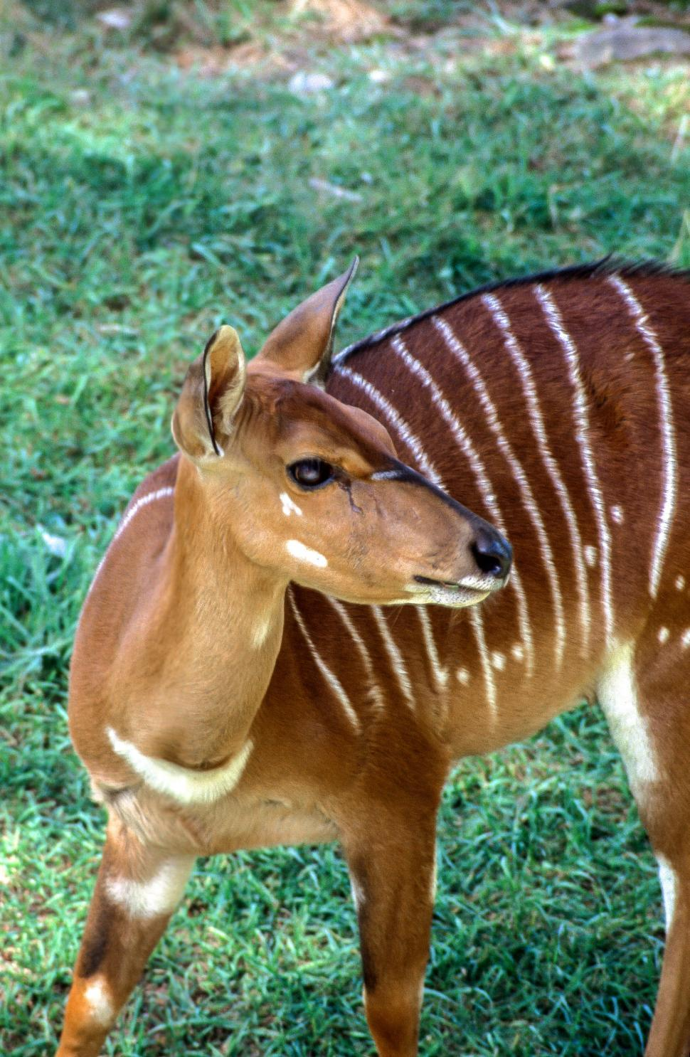 Download Free Stock HD Photo of Striped Deer Online