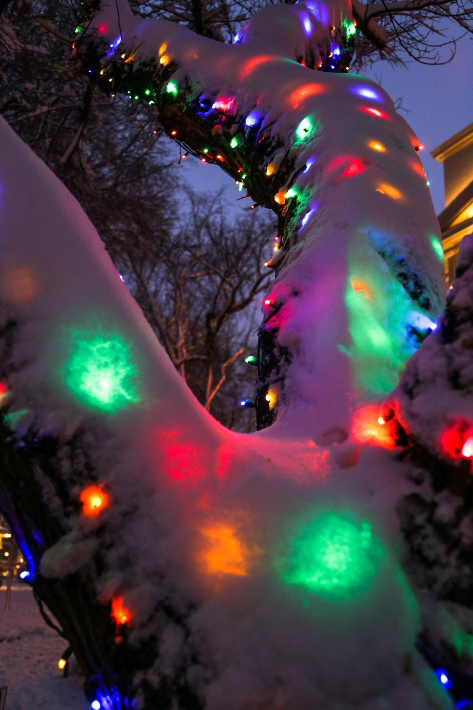 Download Free Stock HD Photo of Tree with snow covered lights Online