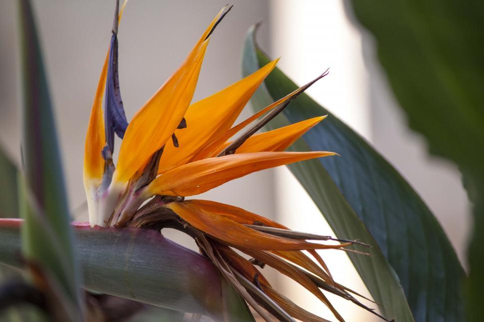 Download Free Stock HD Photo of Tropical bright bird of paradise Online