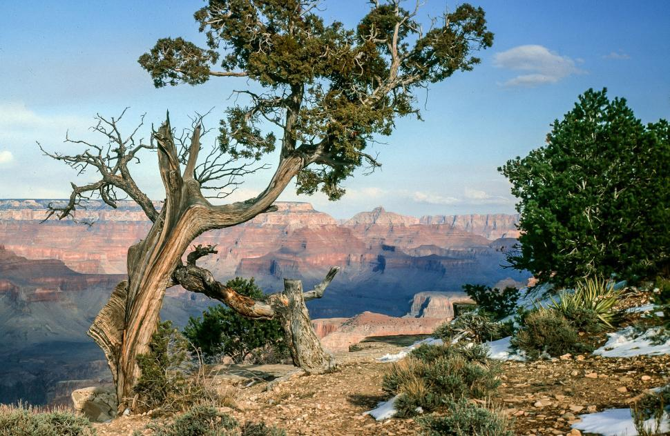 Download Free Stock HD Photo of Pine trees, Grand Canyon Online