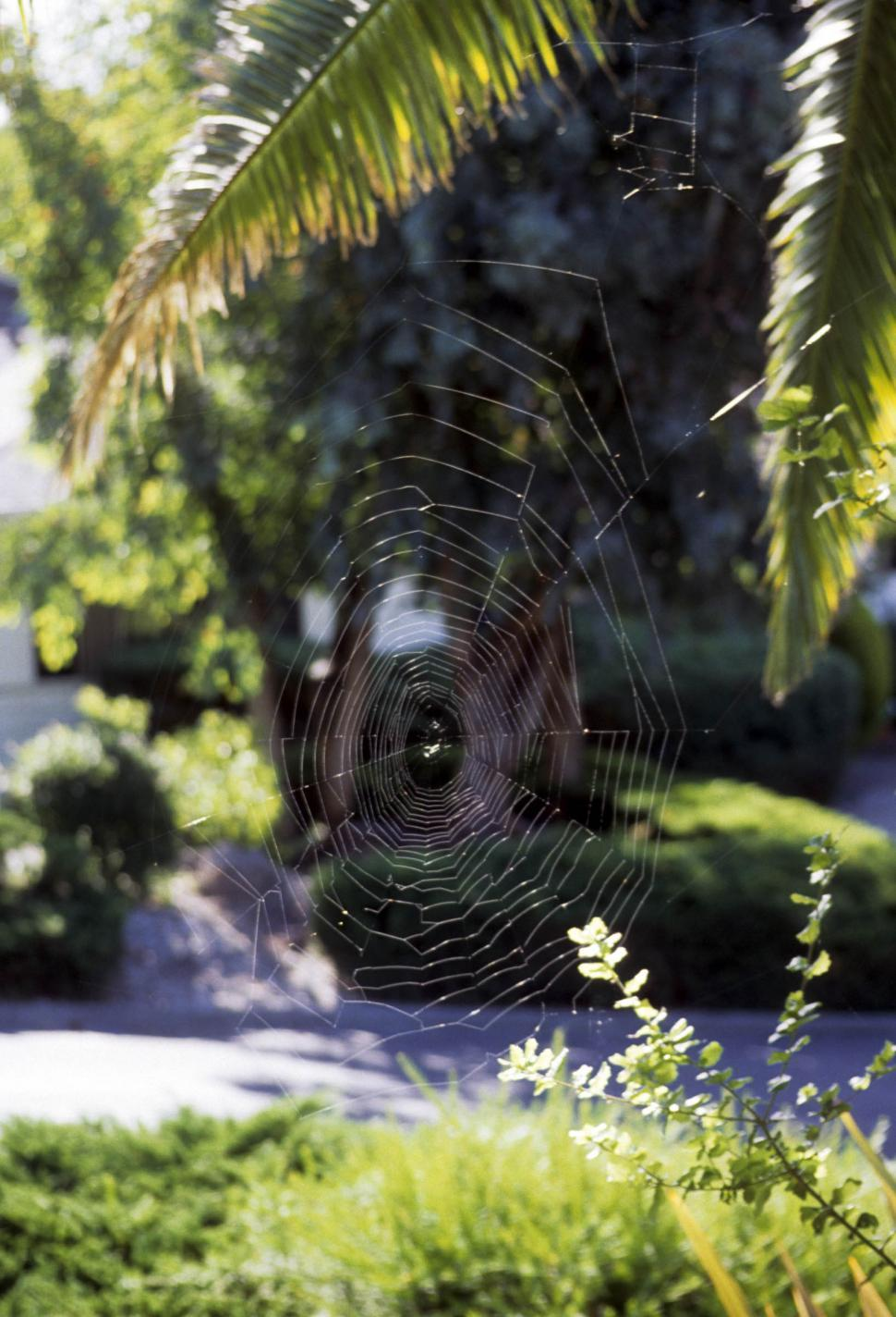 Download Free Stock Photo of Orb-weaver spider - Web