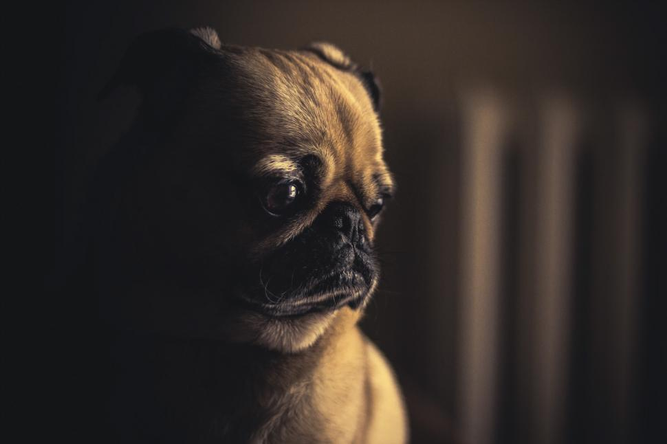 Download Free Stock HD Photo of High Contrast Dog Photo Online