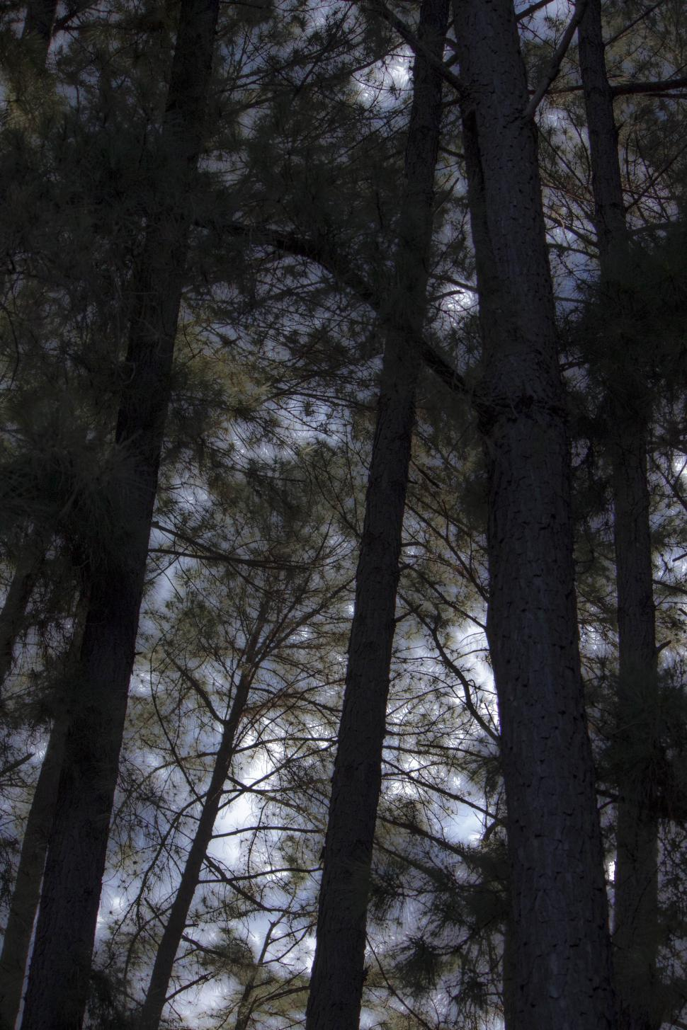 Download Free Stock Photo of Haunted Forest